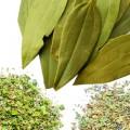 Herbs & Leaves